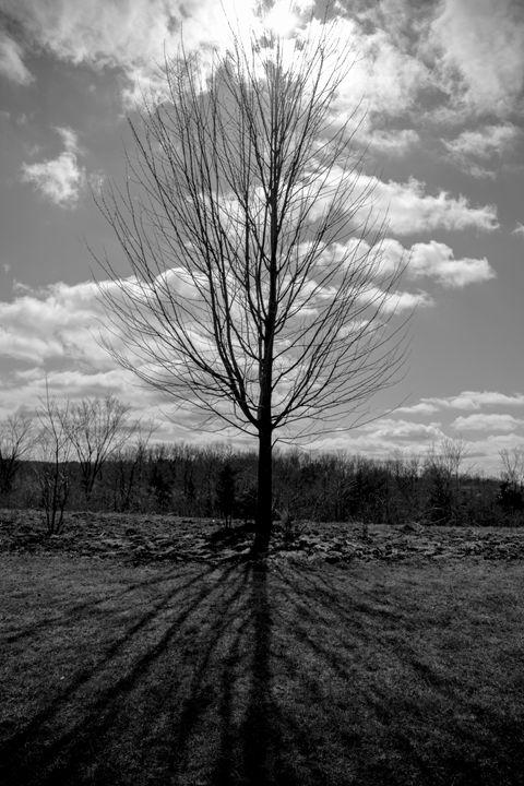 Tree in B/W - ch.o.ne
