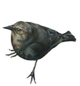 Bakery Bird