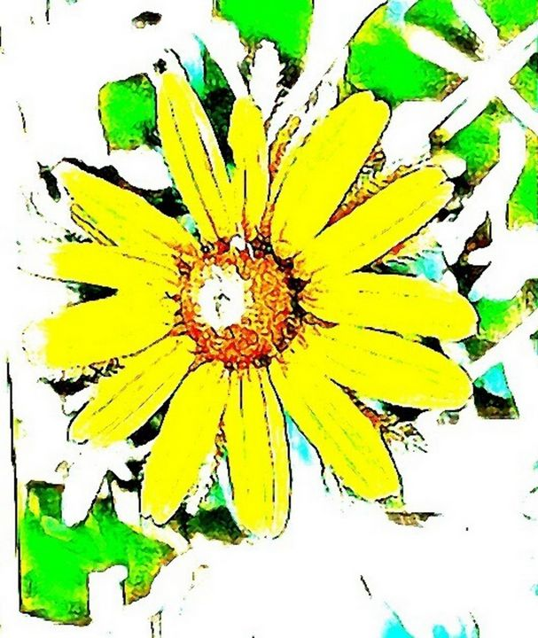 Black-eyed Susan Flower - Graphics By Nesbitt