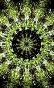 Green Fern Mandala