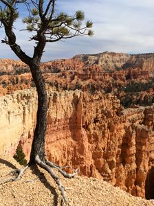 Bryce Canyon Tree from top