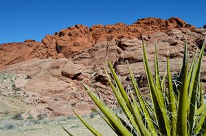 Red Rock Canyon colors