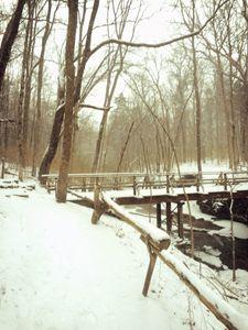 Snowy Wood