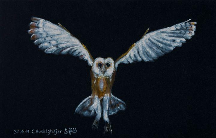 Barn owl - Claudia Luethi alias Abdelghafar
