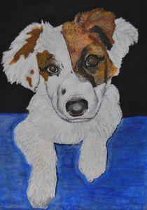 Amber the Dog - Thomas Baden-Riess