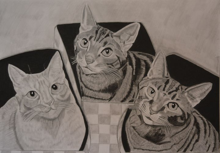 Cat Curiosity - Thomas Baden-Riess