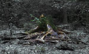 The grand stump