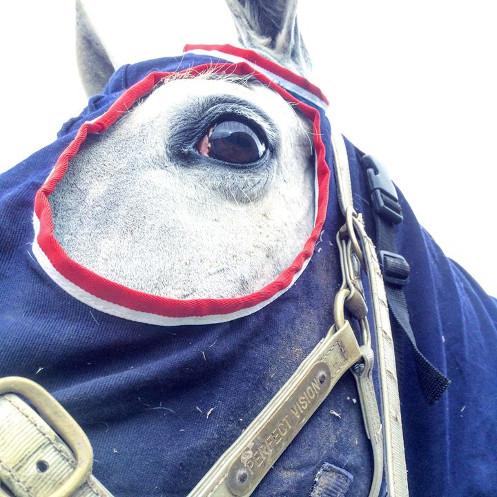 Perfect Vision - Equestrian - Sarah Bell