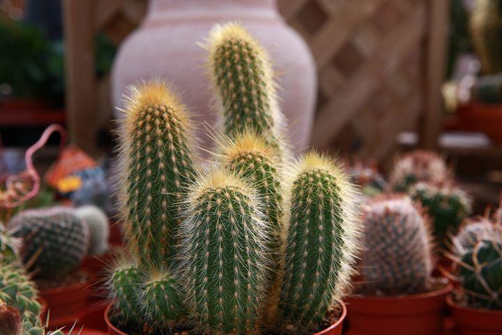Cactus - Benoit Boch