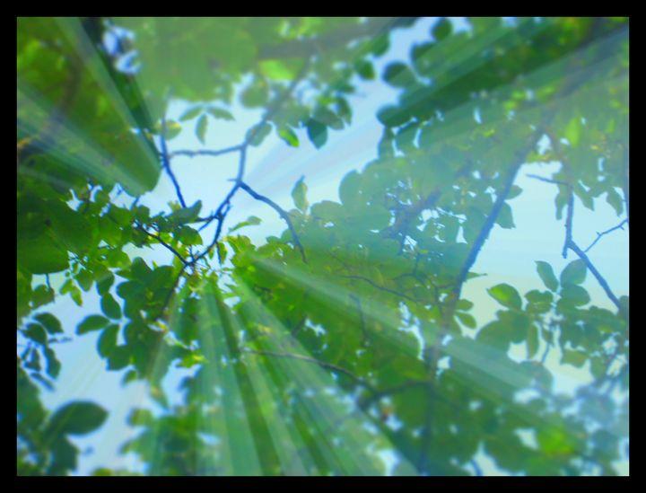 Sunshine - Nature Beauty