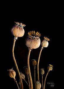 Poppy seed pods - Marijane Kent