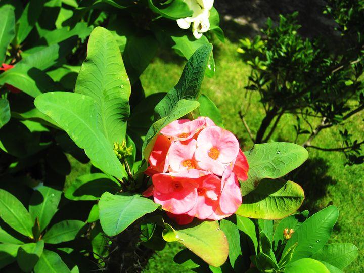 flower - sugiyama kaye
