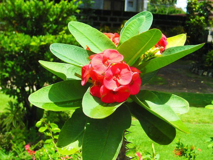 pretty flower - sugiyama kaye