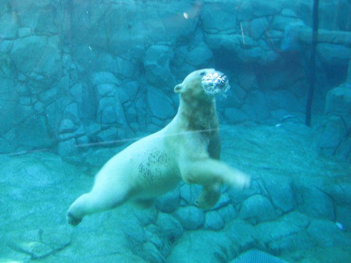 Polar Bear Bubbles - SCS Creations