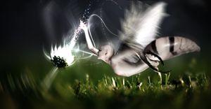 FairyWasp