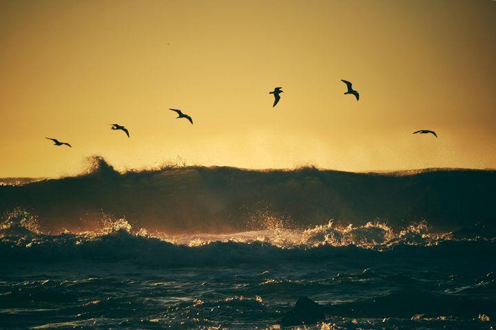 Flying Over Beach - blakelsa
