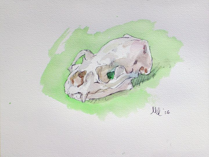 Otter Skull Watercolor - I Paint What I See
