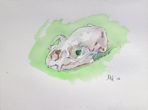 Otter Skull Watercolor