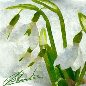 Snowdrop by Trisha Shah