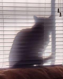 Looking for Boo The Neighborhood cat