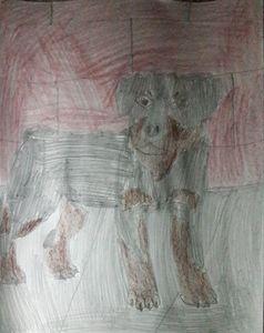 Tough Rottweiler