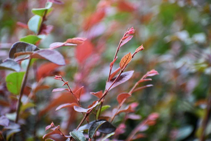 Leaves - Hilary Davis Photography