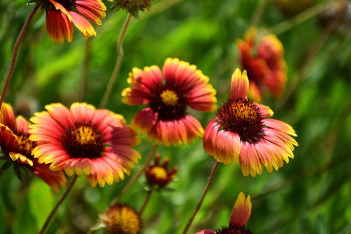 Flowers - Hilary Davis Photography