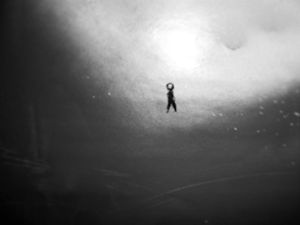 Snow walk - Brock Brown