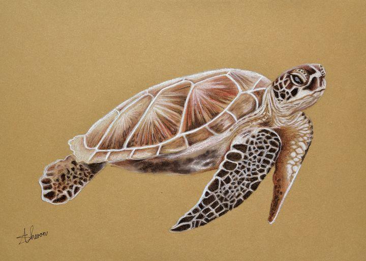 Sea Turtle - Sunet Theron