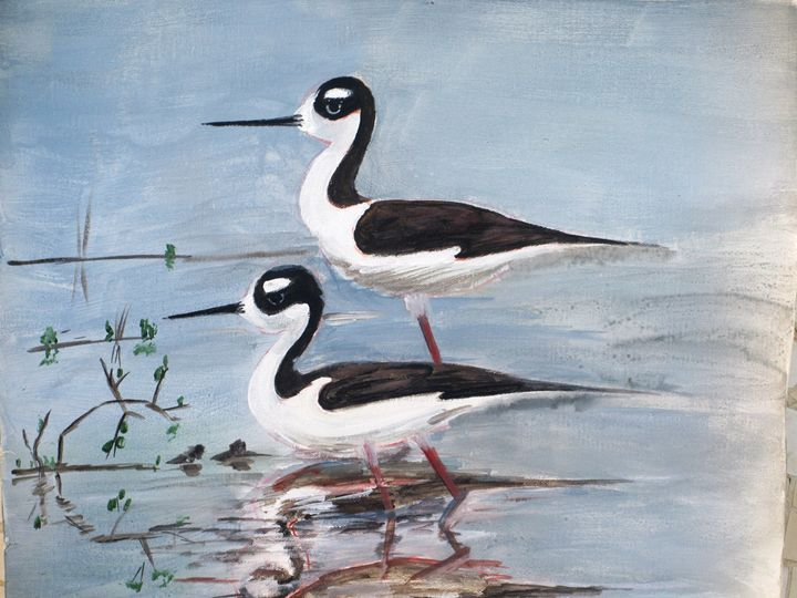 Black-necked Stilt, - Art a Thrilling Spark