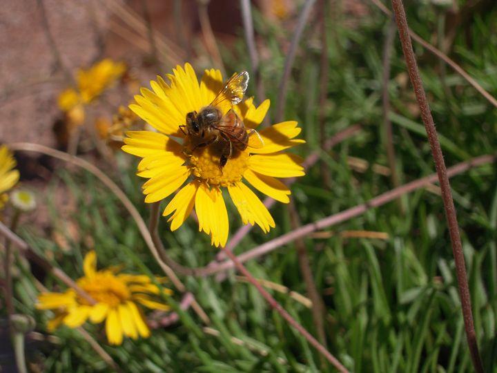 Flower and bee - HyperHope