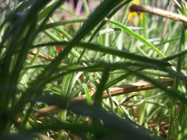 Grass - HyperHope