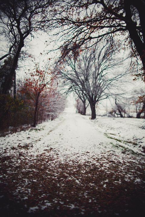 Winter Trail - Indiga Christy Photography
