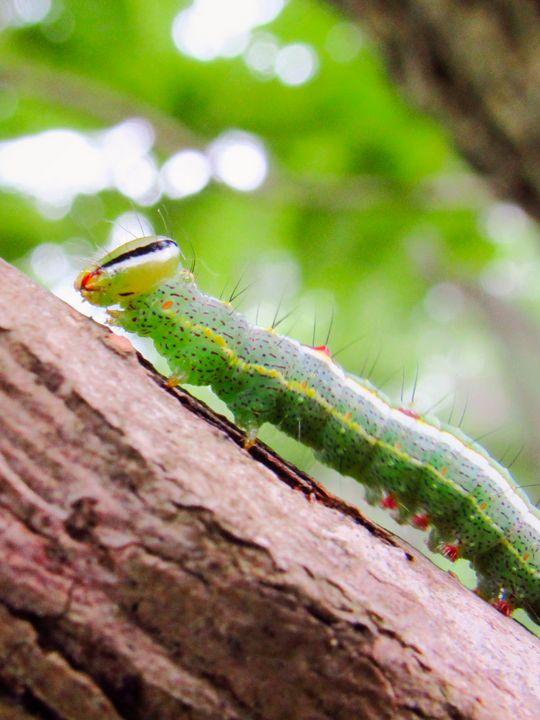 Caterpillar Cutie - Lillibae