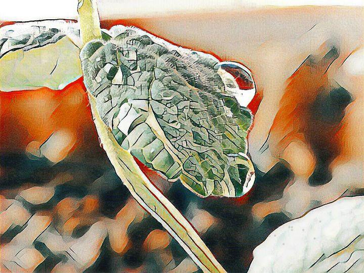 Rain drop on a wild mint leaf - Minkim