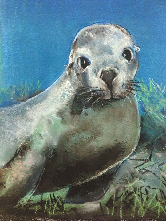 Sea Lion Jurien Bay - Caroline Crow Salmon Turquoise Art