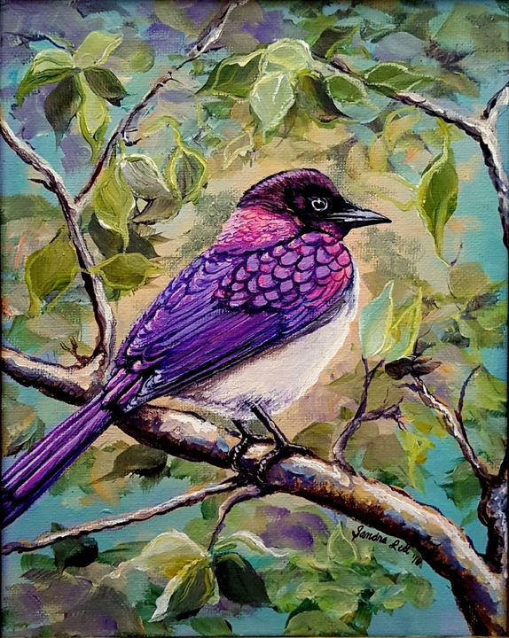 Violet Backed Starling - Sandra Lett