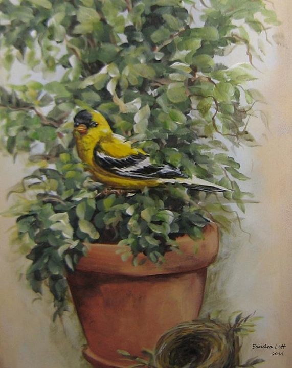 Goldfinch Perching - Sandra Lett