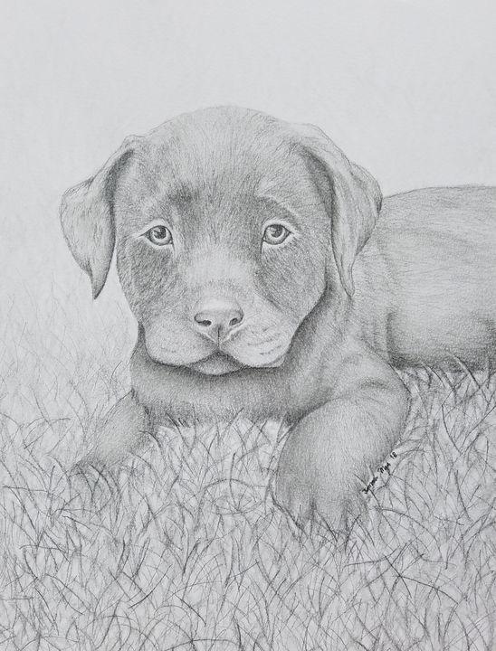 Chocolate Lab Puppy - Tamara Mejia