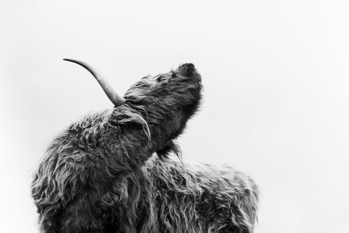 Wild - YoshaPhotography