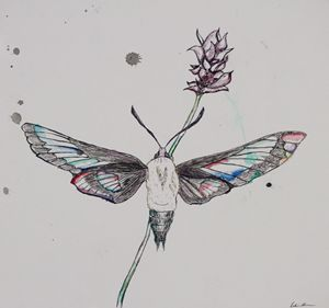 Moth and Lavender