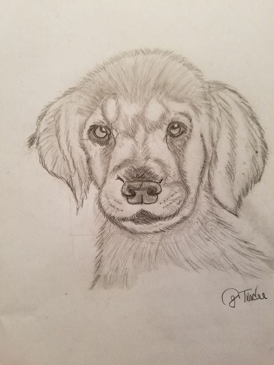 Pete the pup - Tracee k Brasfield