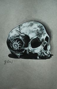 H. Nautilus