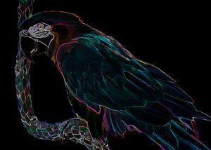 Midnight Macaw