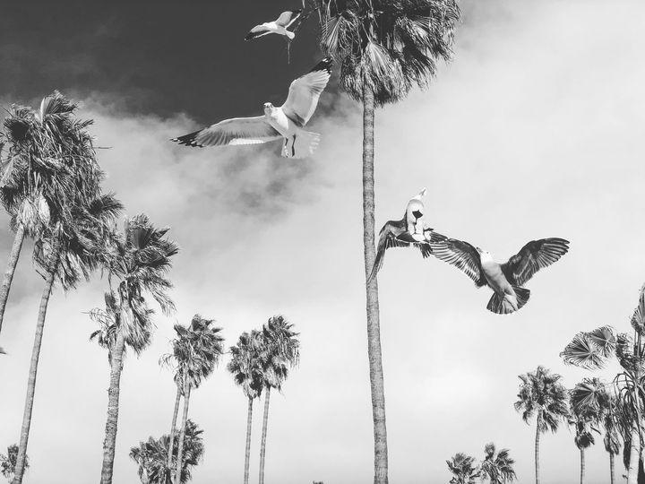 The Birds - Jon Moore