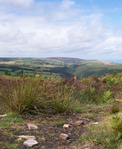 Exmoor with Pink Heather