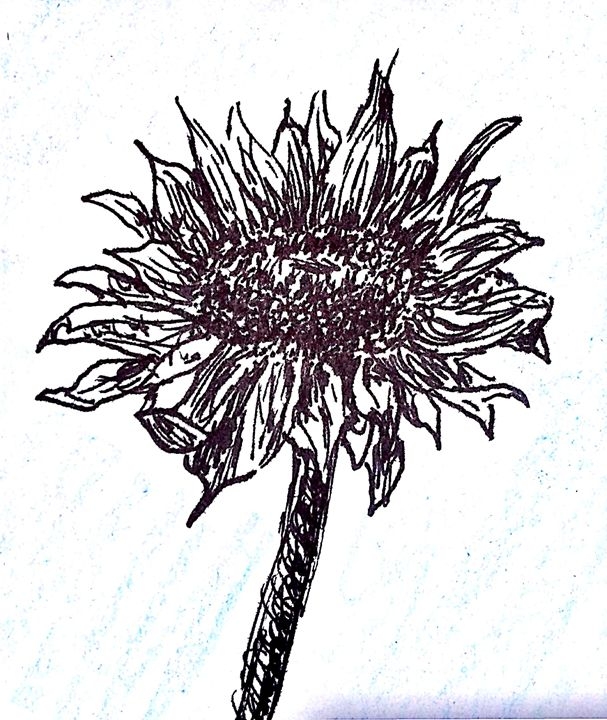 Sunflower - What a Sketchy Mess