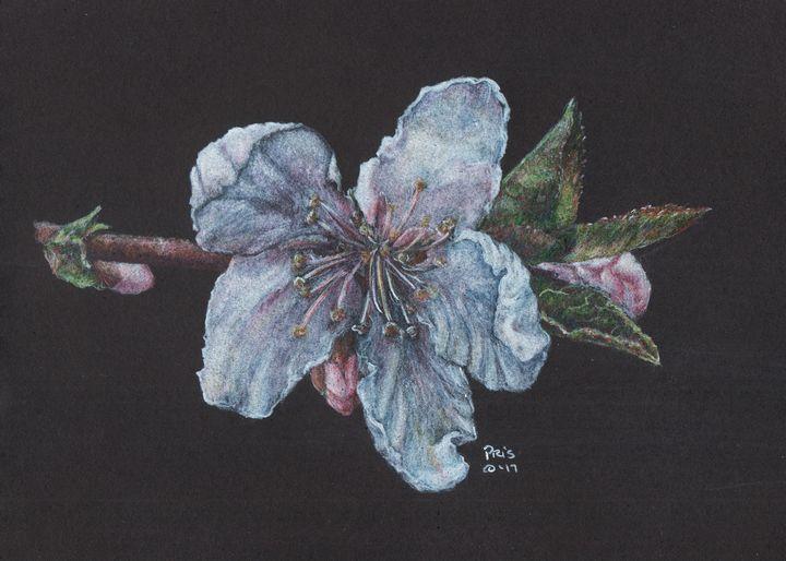 Peach Blossom - Pencils by Pris