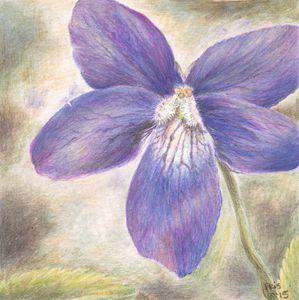 Violet - Pencils by Pris