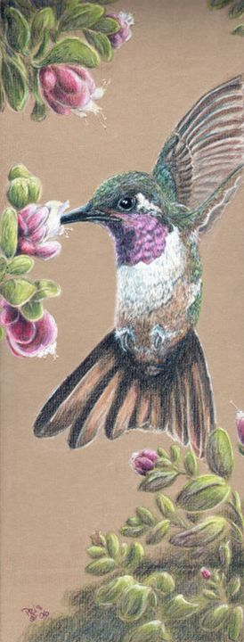 Ruby Throated Hummingbird - Pencils by Pris
